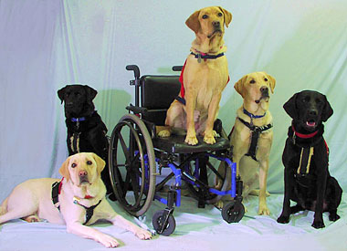 Tasks Performed By Service Dogs