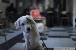 Puppies Behind Bars is one organization that trains service dogs for veterans.